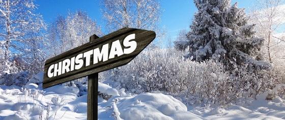 Christmas Tree Farm, Battlesbridge & Hawkwell Christmas