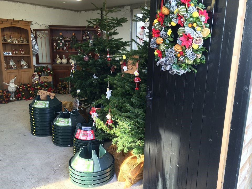 Christmas Tree Farm, Battlesbridge & Hawkwell christmas ...
